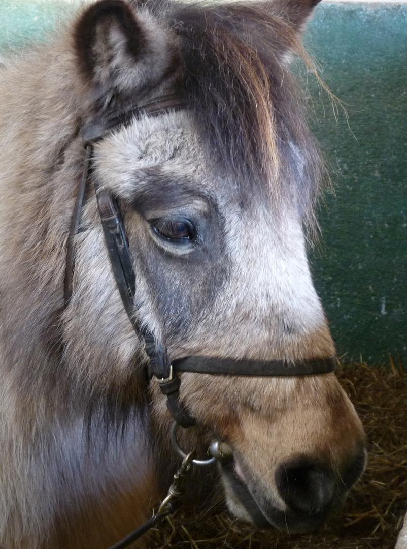 Le poney triste