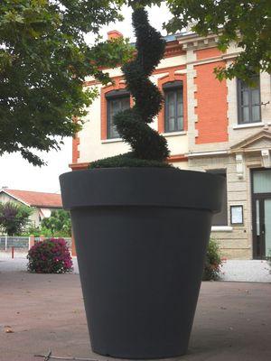 Le pot du Géant vert !