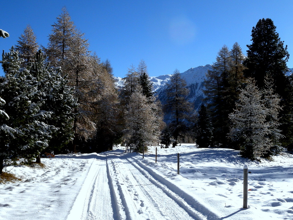 Le première neige / Der erste Schnee / La primera nieve..05