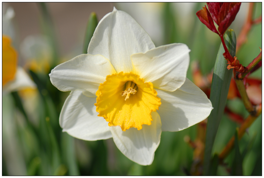 Le printemps (2)