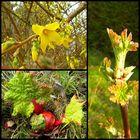 Le printemps 2009 est arrivé ce matin dans le jardin.