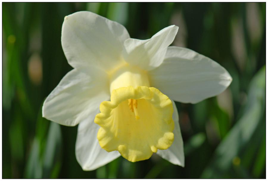Le printemps (3)