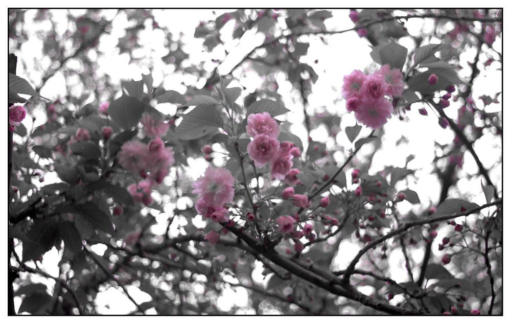 Le printemps.