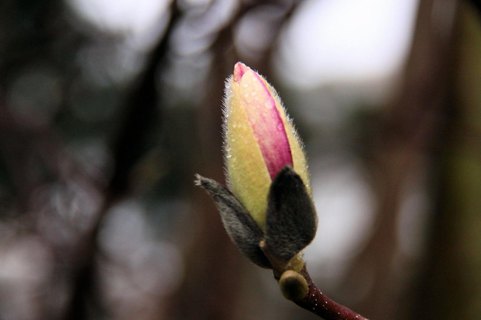 le printemps à J-3