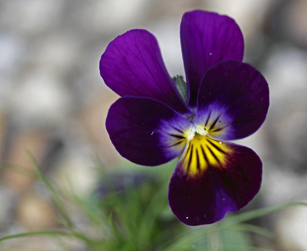 le printemps arrive !!!