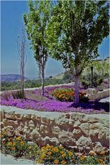 Le printemps au Sofitel Petra Taybet Zaman