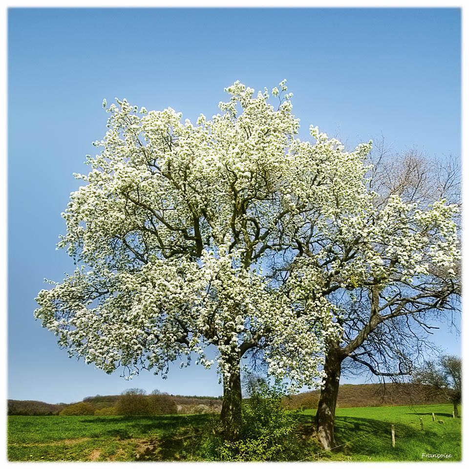 Le printemps c'est la Fête......