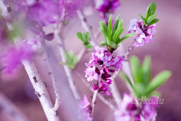 Le printemps commence