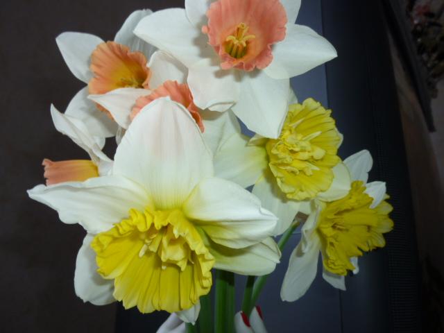 le printemps de mon jardin