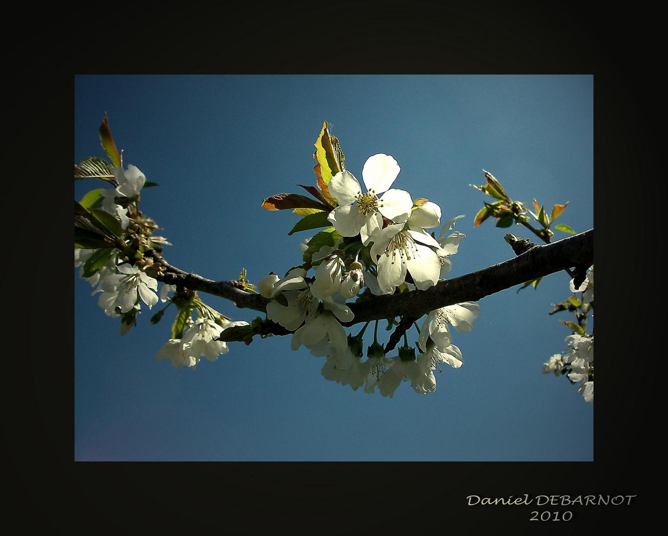 Le printemps enfin