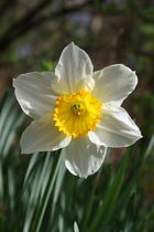 Le printemps est de retour
