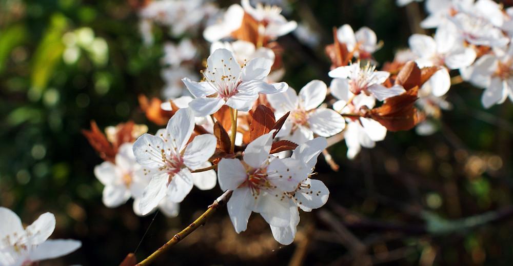 Le printemps est là.