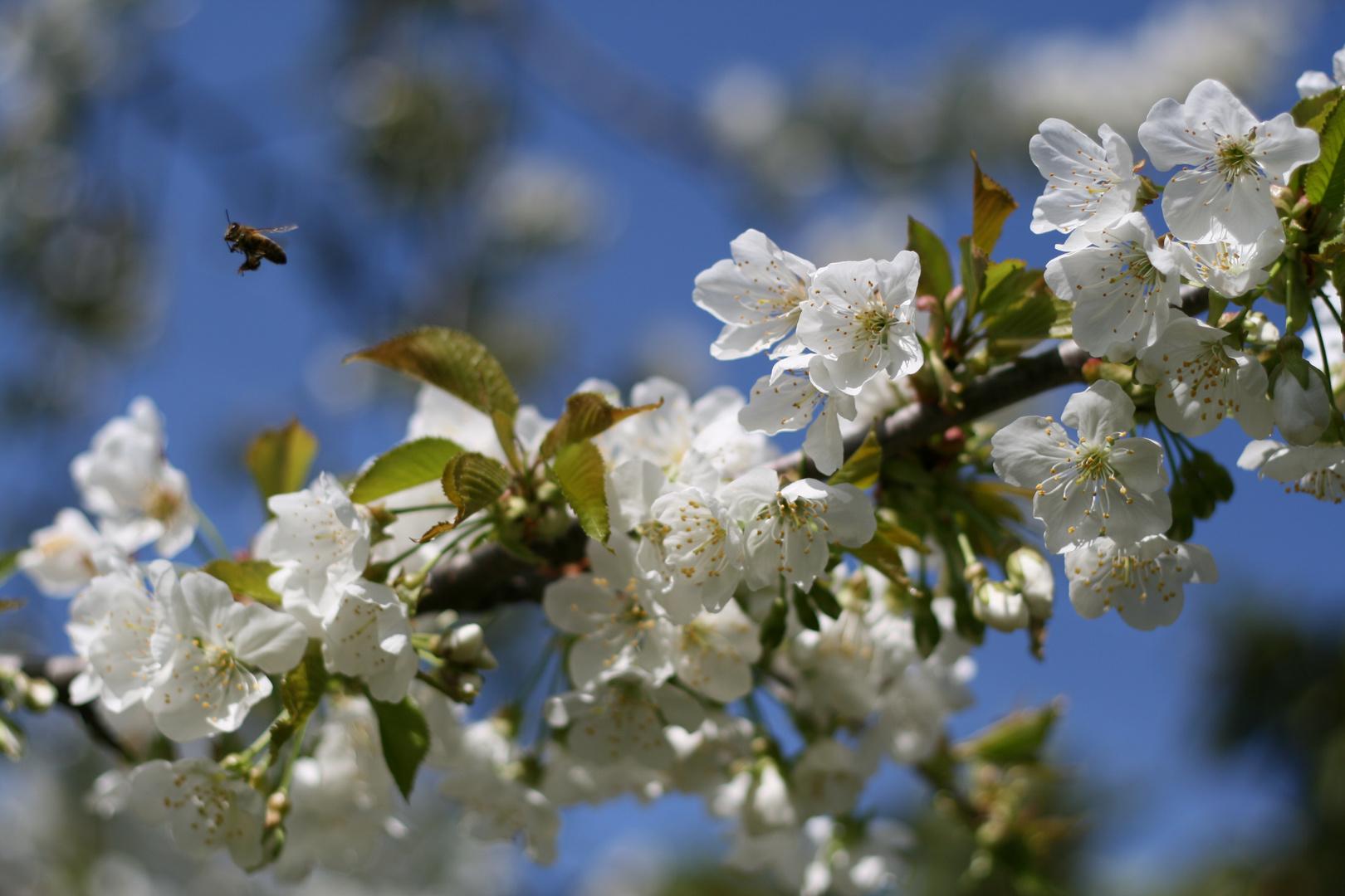 Le printemps est là!
