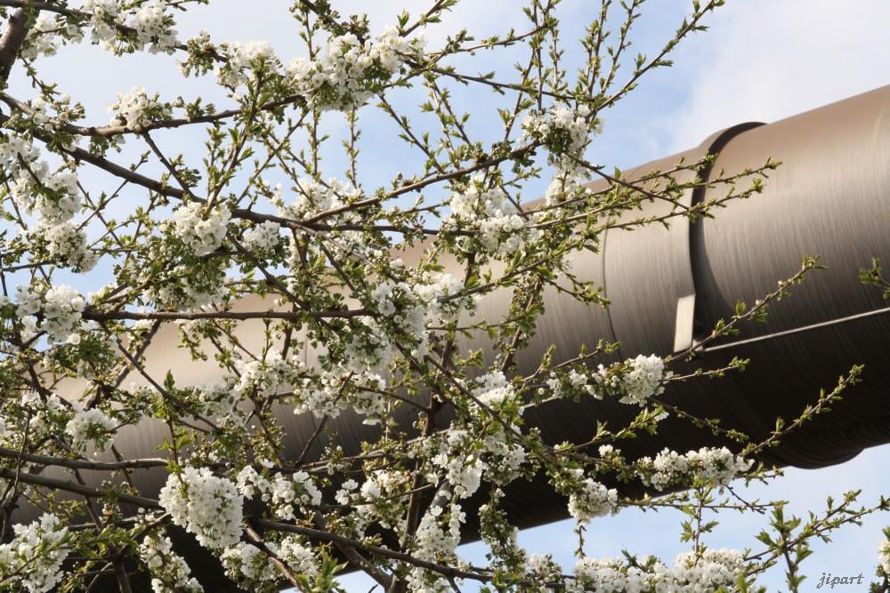 Le printemps est la sève des énergies