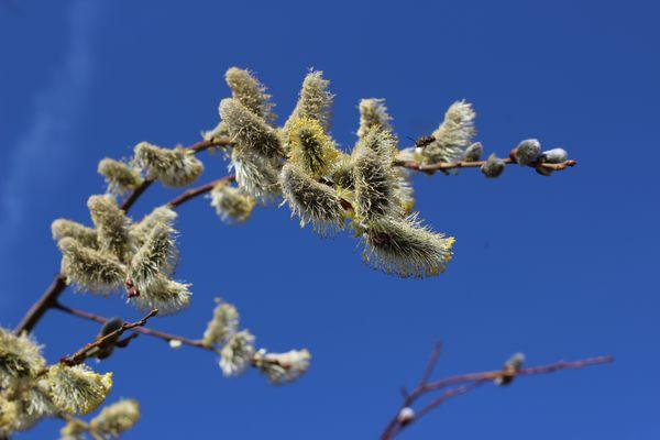 Le printemps est sur les arbres !