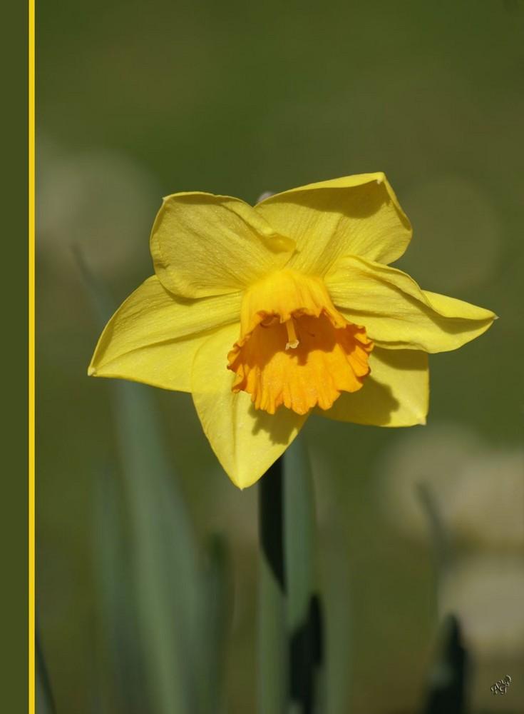le printemps et ses couleurs ...