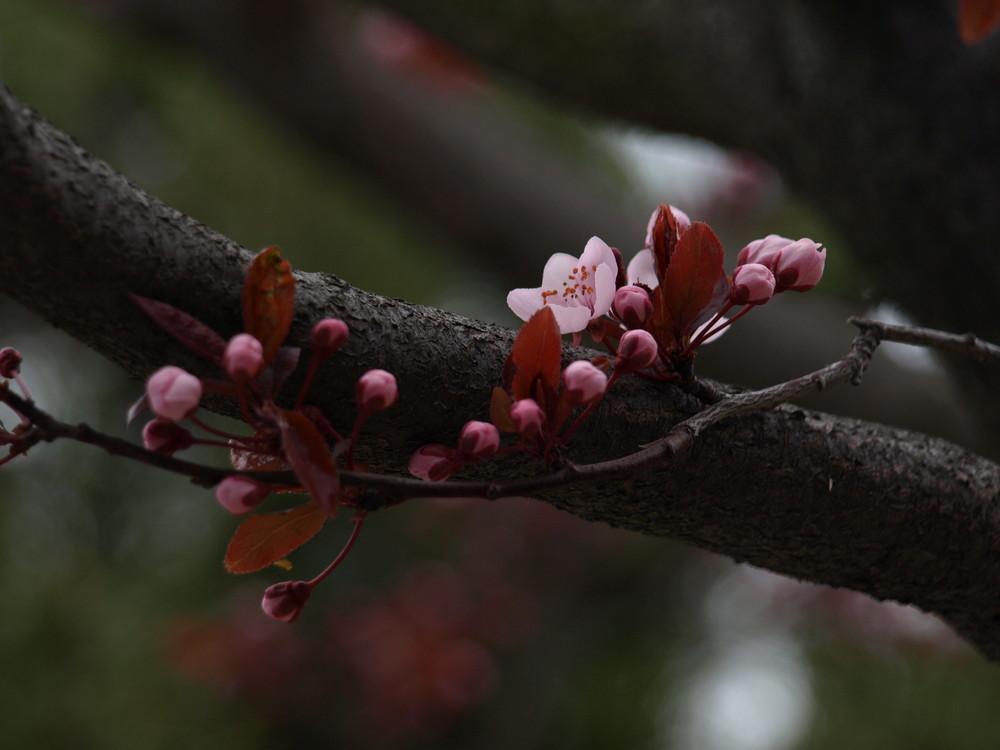 Le printemps! ou la vie en rose!