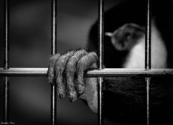 ...Le prisonnier...