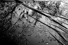 Le reflet de l'arbre