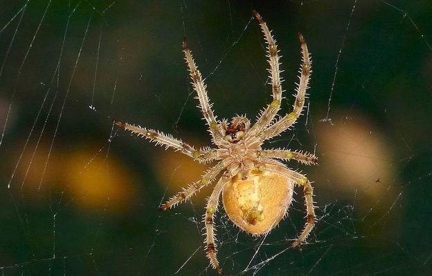 le regard de l'araignée