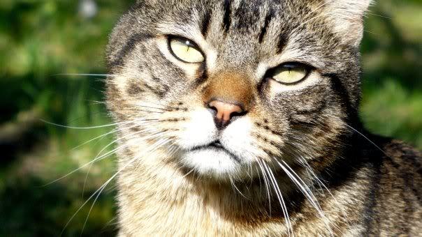 Le regard du chat