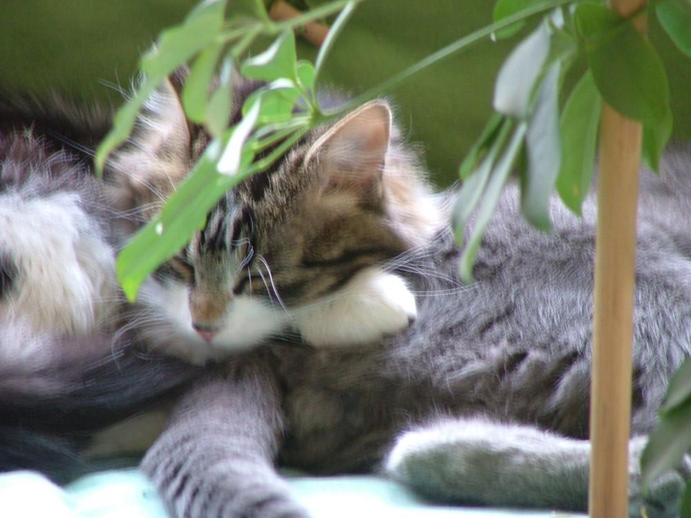 Le repos du chat