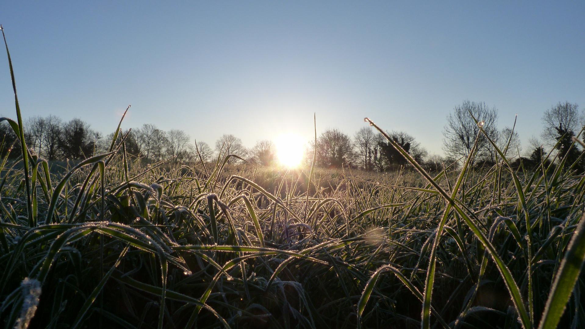 le retour du printemps et du soleil