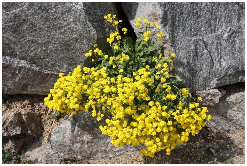 le rocher aux fleurs