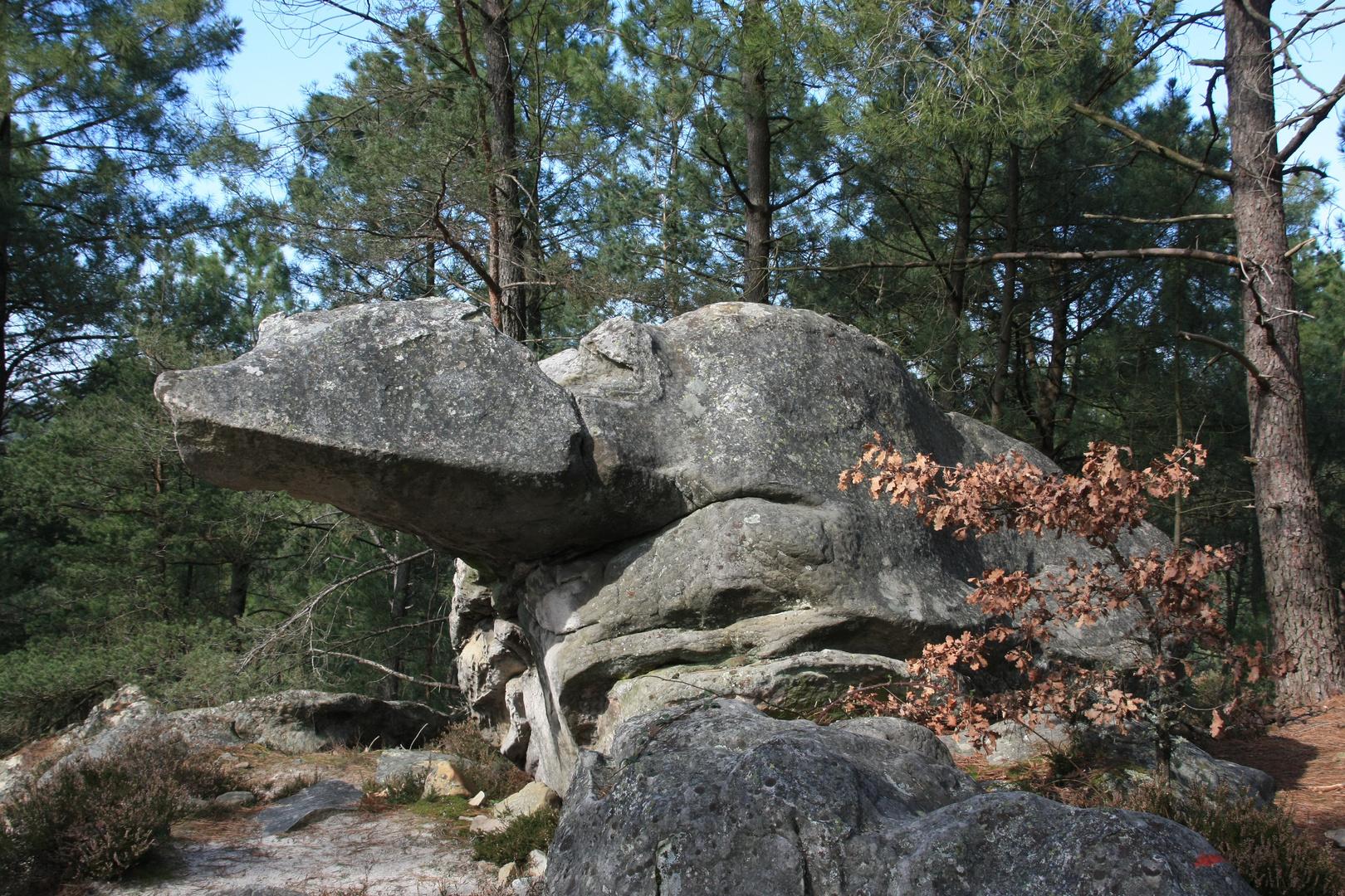 Le rocher de la Tortue aux 25 bosses de Fontainebleau..