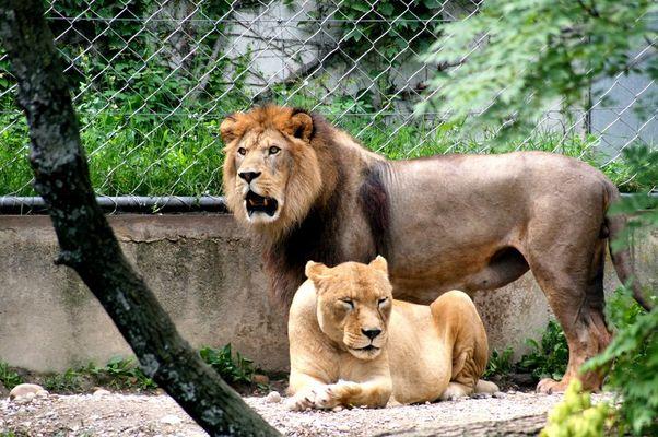 Le Roi et sa Reine