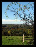 Le Rond Chêne