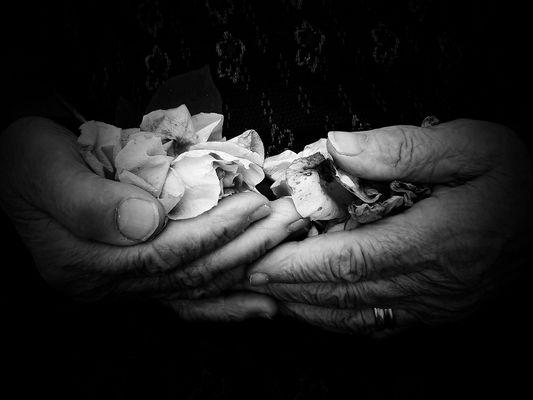 le rose che non colsi