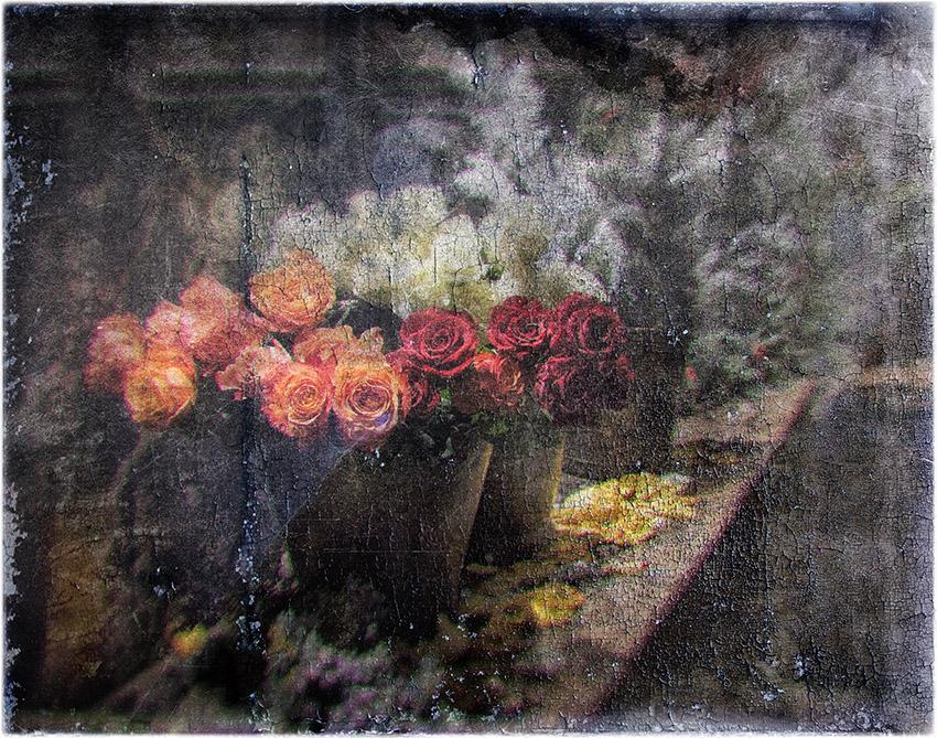 le rose di natale