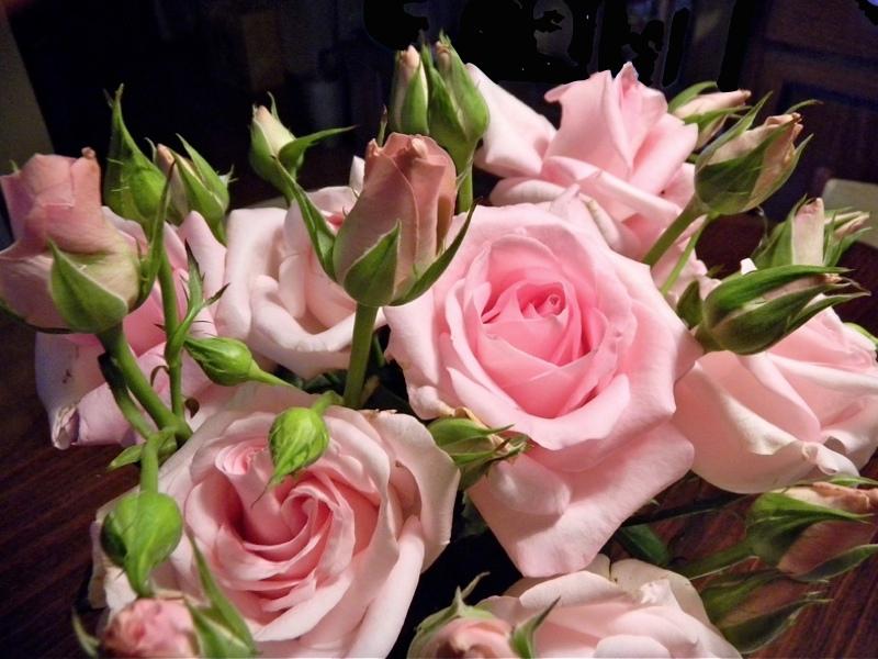 Le rose rosa foto immagini piante fiori e funghi for Foto di rose bellissime