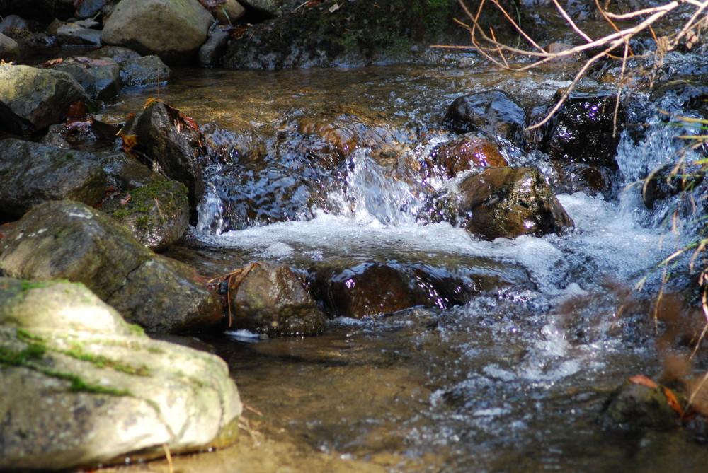 le ruisseaux