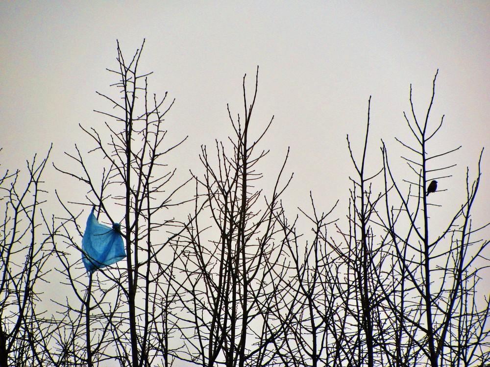 Le sac et l'oiseau...conte moderne.