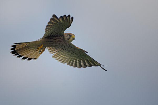 Le Saint Esprit en vol