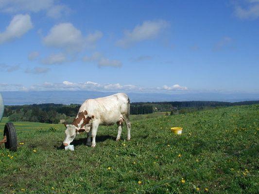 le secret du beurre salé