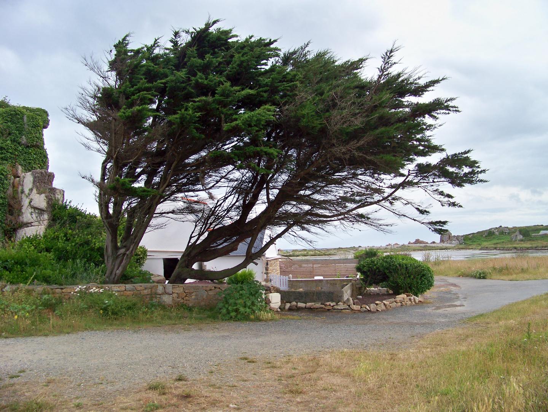 le sens du vent !!