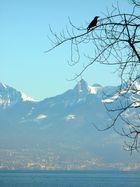 Le silence de la montagne est encore plus beau lorsque les oiseaux se sont tus. [Taisen Deshimaru