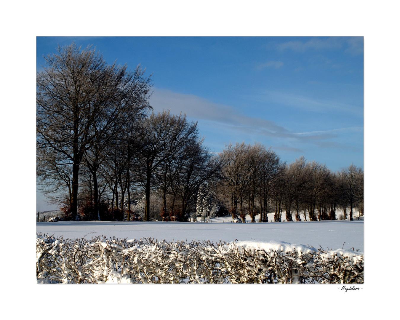 Le silence de l'hiver - 4