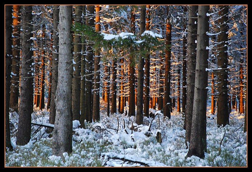 Le soir le soleil se faufile entre les arbres