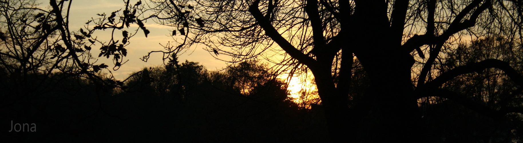 Le soleil au bois dormant