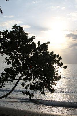 le soleil caché par l arbre