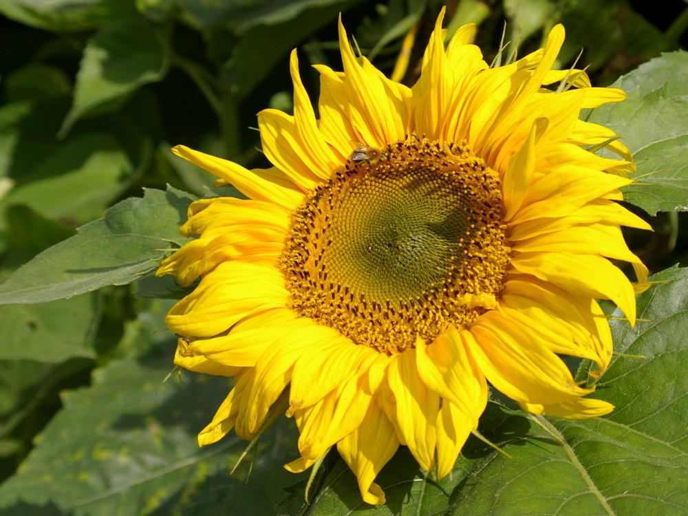 Le soleil du jardin