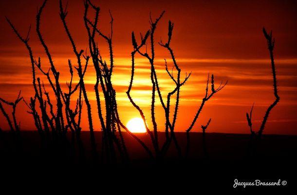 Le soleil du matin
