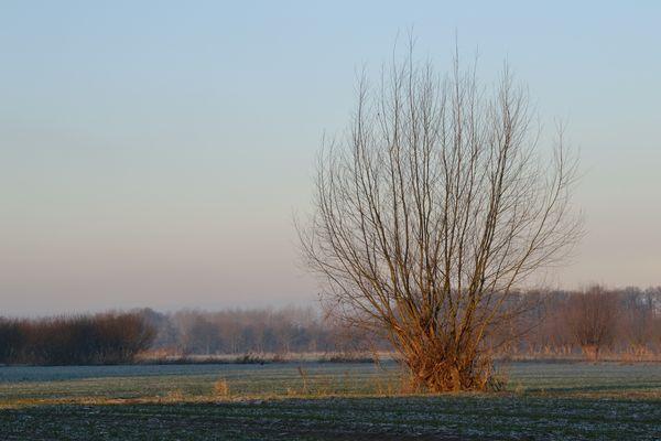 Le soleil qui pose ses rayons sur l'arbre