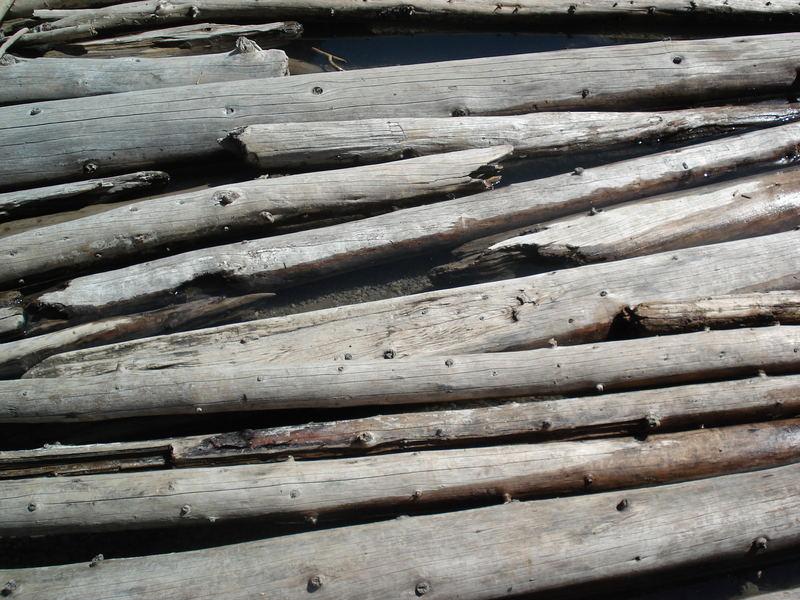 Le tapis de troncs 2