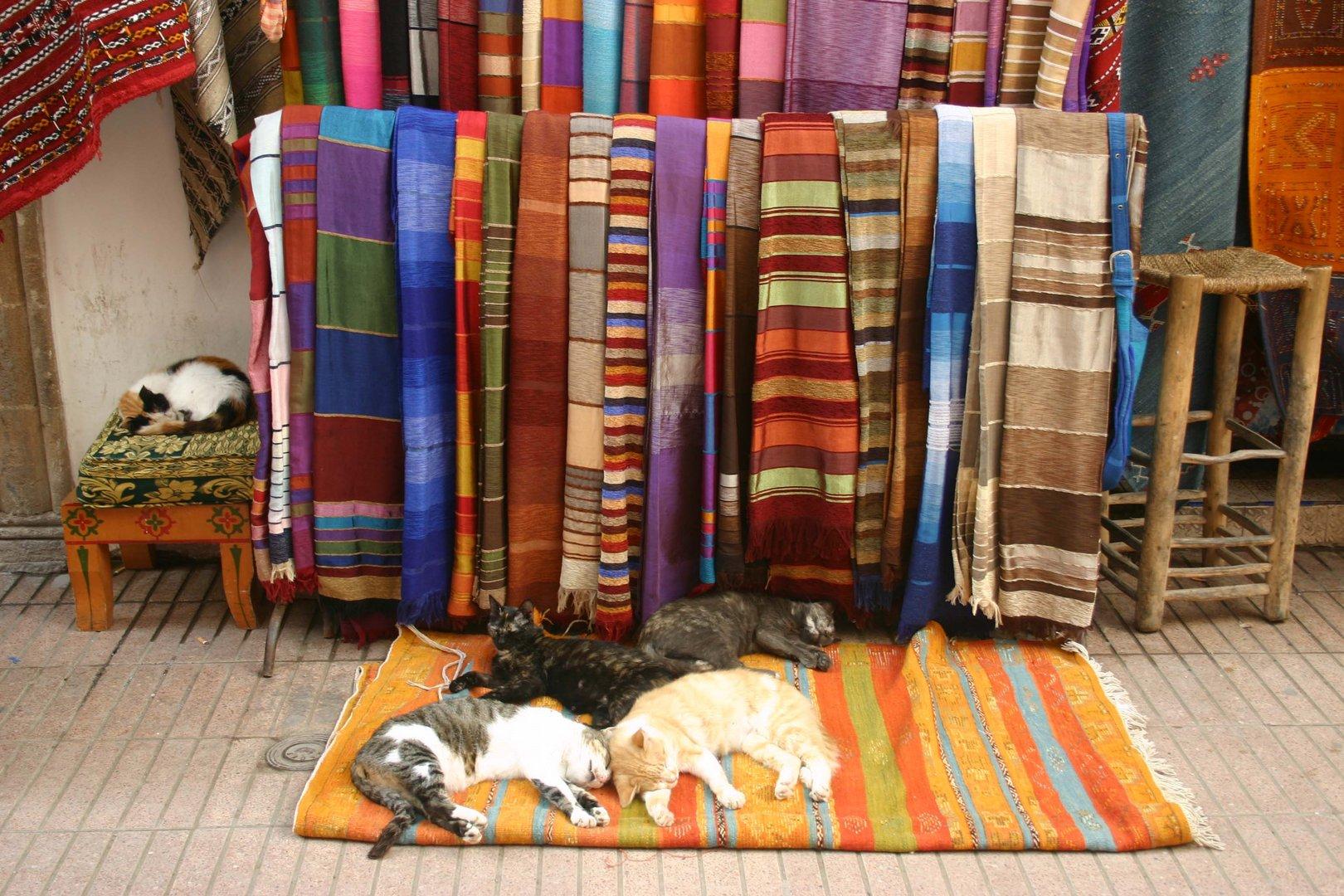 le tapis les chats