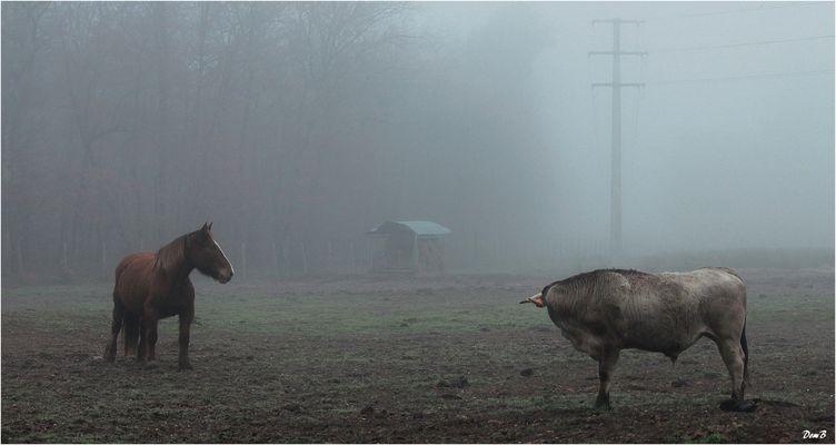 Le taureau et le cheval
